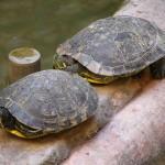 turtles into B&B's entrance hall