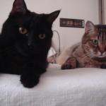 Gatti biancaluna Bed and Breakfast vicino Stazione Roma Termini